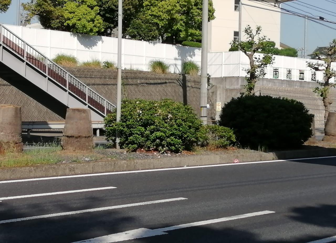 旧2号線ヤシの木